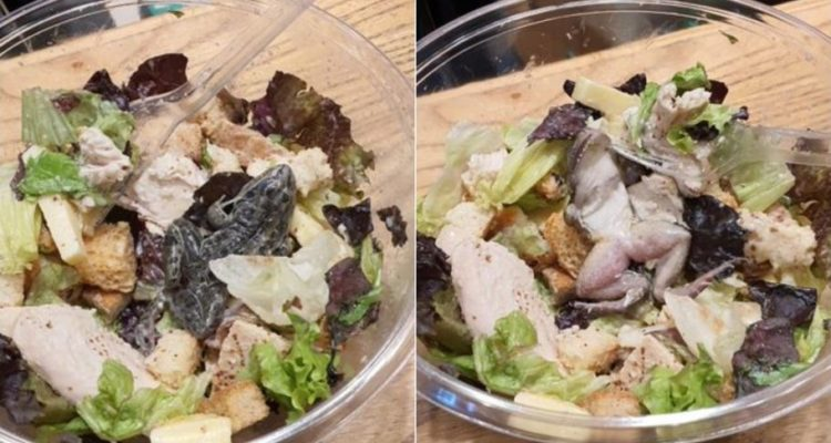 Mujer fue sorprendida en restaurante: encontró una rana muerta en su platillo