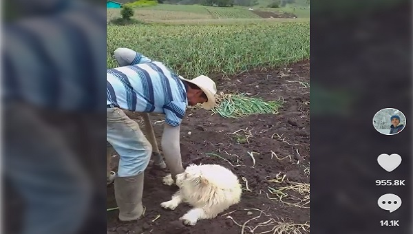 enterrando a perro